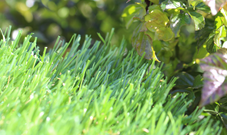Wholesale Synthetic Grass